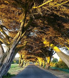 Beautiful tree lined street in Port Fairy basking in the late afternoon sun. Great capture courtesy of @portfairypics #liveinvictoria #victoria #vic #portfairy #treelined #cypress #trees #street #sunlight #golden #afternoon #summer #nature #greatsouthcoast #southwestvic #beautiful #scenic #love #australia #liveinaustralia by liveinvictoria http://ift.tt/1UokfWI