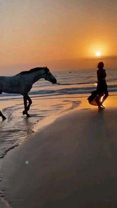 Horses, Popular, Nature, Animals, Painting, Highlights, Naturaleza, Animales, Animaux