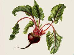 βότανα,βότανο,βότανα και υγεία,botanologia,βοτανολογία,τριχόπτωση,αδυνάτισμα