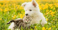 Jolies, décoratives... du printemps à l'hiver, fleurs et plantesapportent couleur et chaleur à votre intérieur comme à votre jardin.Certaines d'etre elles sont néanmoinsà proscrire lorsque l'on a des chiens ou des chats à la maison.