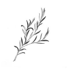 from: http://www.artflakes.com/en/products/rosemary-6 but in b&w