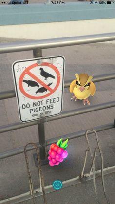Para quem não entende inglês é não alimente os pombos