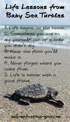 Turtle Quotes Pleasing Small Beginnings Big Things Motivation Turtles Quotes Wellness .