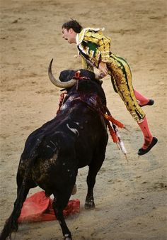"""Matador Torero Israel Lancho is gored during a bull """"fight"""" in Madrid, Spain, 2009"""
