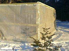 Learn some easy ways to winterize your chicken run to keep your chickens happy and healthy through the cold months.