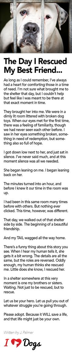 OMG, if you've ever rescued a pet you will relate!!!! Love this story.