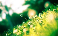 clover theme background images, Lorne Hardman 2017-03-28