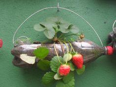 How about growing strawberries in plastic bottles? Found on Fb Flower Planters, Diy Planters, Flower Pots, Jardim Vertical Diy, Vertical Garden Diy, Fruit Garden, Edible Garden, Plastic Bottle Planter, Plastic Bottles