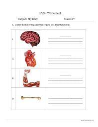 english teaching worksheets nervous system nervous pinterest worksheets and life skills. Black Bedroom Furniture Sets. Home Design Ideas