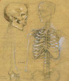 Robert Liberace, skeleton, class demo