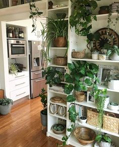 dream house kitchen plant wall open shelf shelving stainless steel wood floor white cabinets