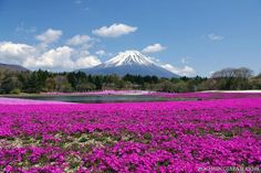 There's not really a best time to see Mt. Fuji, but I would go in (late) spring to see this beautiful scenery again.