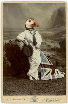 surreal vintage style art photo collage postcard patriotic puffin (Charlotte Cory)