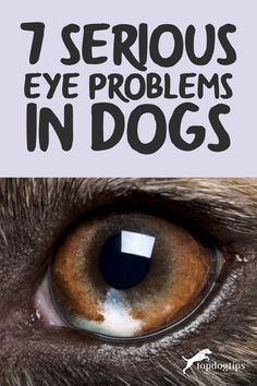 There are plenty of diseases that affect the health of your dog's eyes, with many secondary diseases and hereditary eye problems in dogs as well. Common Eye Problems, Eyes Problems, Dog Health Tips, Most Common, Good Advice, Dogs, Pet Dogs, Doggies, Lifehacks