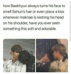 Pampered Boy Oh Sehun K Pop, Chanyeol Baekhyun, Exo K, Baekhyun Facts, Exo Ships, Exo Facts, Xiuchen, Exo Memes, Chanbaek