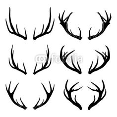 antlers - Google Search                                                       …