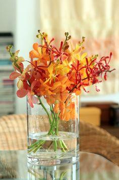 Orchids (Aranthera and Monkara)