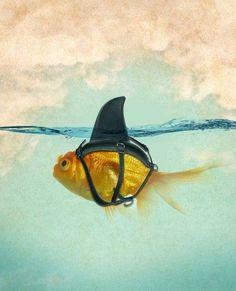 ...Fish in the sea...