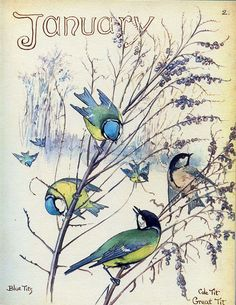 Blue Tit and Chickadees - Morning Earth Artist/Naturalist Edith Holden