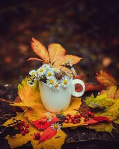 Photo of the beauty of autumn🍂❤️🎃🌆 for fans of Autumn 43029037 Autumn Rain, Autumn Cozy, Autumn Feeling, Autumn Nature, Autumn Scenery, Autumn Trees, Autumn Tumblr, Pumpkin Patch Farm, Zombie Prom Queen Costume