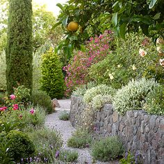In drought-ridden areas, forgo Japanese maples, ferns, azaleas, and rhododendrons for plants that thrive in a Mediterranean climate.