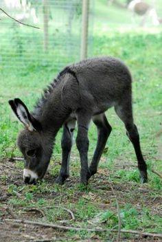 Donkey baby.