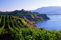 view of vineyards naramata penticton okanagan british columbia canada British Columbia, Camping Au Quebec, The Places Youll Go, Places To Visit, West Coast Canada, Vancouver City, Vancouver Island, In Vino Veritas, Canada Travel