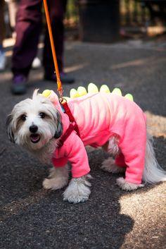 28 Costume-Clad Pups Winning Halloween #refinery29  http://www.refinery29.com/2014/10/76848/nyc-halloween-dog-parade-pictures-2014#slide2  Dogosaurus has risen.