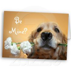 """Golden Retriever With Flowers """"Be Mine"""" Card! Click the Zazzle link below!"""