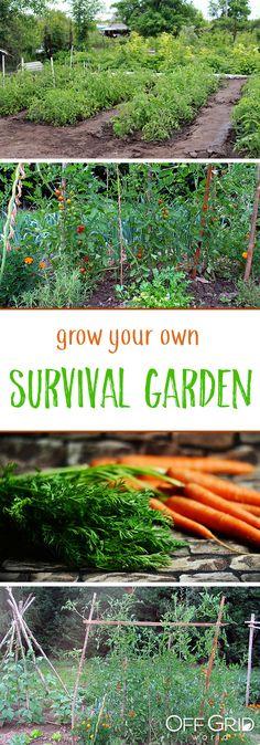 Tips to plant a survival garden