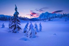blue, snow, forest...