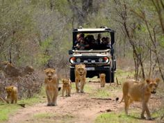 Inland safari destination Kruger National Park is populated by big game. The Western Cape offers beaches, lush winelands around. Kruger National Park, National Parks, Safari Holidays, Table Mountain, Vacation Packages, African Safari, Day Tours, Continents, Coastal
