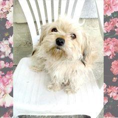 My dog <3 My darling <3