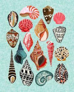 Seashells Ocean Nautical Beach Seaside Children Kids Baby Home Dec Shell Illustration Andrea Lauren Art Print by Andrea Lauren Design - X-Small Art And Illustration, Illustrations, Andrea Lauren, Art Inspo, Sea Shells, Art Drawings, Artsy, Art Prints, Artwork