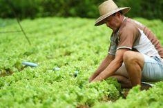 Sepror/edital/aquisição de alimentos Os produtores rurais de 27 municípios no Amazonas podem concorrer ao edital lançado nesta segunda-feira, 13, pela Secretaria de Estado da Produção Rural (Sepror). A chamada pública para aquisição de gêneros alimentícios, no âmbito do Programa de Aquisição de Alimentos (PAA), segue até o dia 12 de abril. O edital da chamada está disponível no site da instituição (www.sepror.am.gov.br). De acordo com o secretário de Produção Rural, Hamilton Casara, podem…