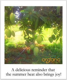 #Mangoes; #Godsgift in #blistering #summer #heat!