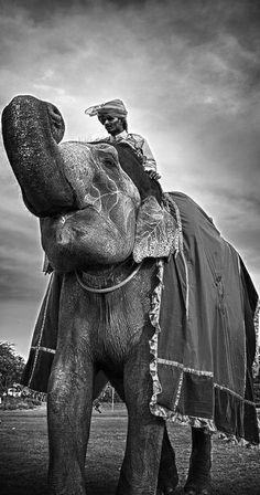 Elephant festival held in Jaipur