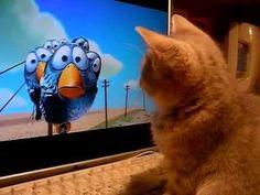 Gatito volviendose loco frente al televisor. Gatos graciosos y divertidos haciendo tonterias. - http://otrascosasvirales.com/gatito-volviendose-loco-frente-al-televisor-gatos-graciosos-y-divertidos-haciendo-tonterias/