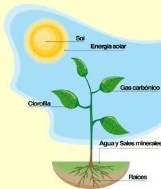 Nesta páxina podemos realizar varios xogos acerca da fotosíntese, as súas fases e a nutrición das plantas. Plant Science, Kids Education, Biology, Homeschool, Nutrition, Life, Journal, Iphone, Gardens