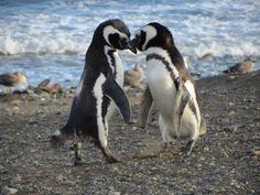 Parque Nacional Isla Magdalena: Resguardando el hábitat de los pingüinos