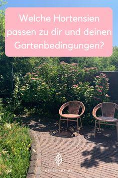 Finde die richtige Hortensie für dich und deine Gartenbedingungen! Outdoor Furniture Sets, Outdoor Decor, Climber Plants, Limelight Hydrangea, Garten, Outdoor Furniture