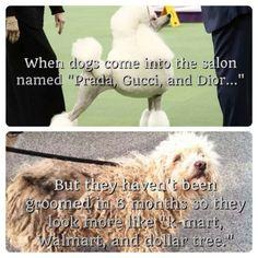 dog grooming humor