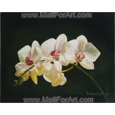 """The painting White Orchid is SOLD, however the artist can create a duplicate for you. When you place the order the artist will paint the duplicate in one month time.    The oil painting White Orchid is specially created for the fans of Orchids. You can also have a look at Pink Orchid.    Buy the paintitngs of flowers - they could bring freshness and brightness at your place.    The size (L x W) of this oil canvas painting is: 27 x 22cm (10.63"""" x 8.66"""")."""