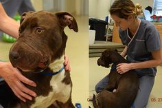 I'd rather support THIS Caitlyn right now.  The dog, Caitlyn, with the tape removed is in critical condition.