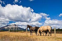 Horse Industry Association of Alberta
