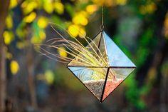 terariu-planta-aeriana-piramida-de-agatat-patru-fete-natura-greenarium Bird Feeders, Outdoor Decor, Vintage, Home Decor, Plant, Geometry, Decoration Home, Room Decor, Vintage Comics