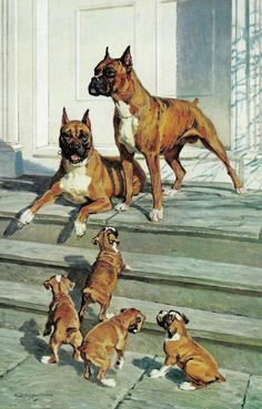 Vintage Boxer Dog Illustration - 1950's Boxer Family Puppies by Edwin Megargee