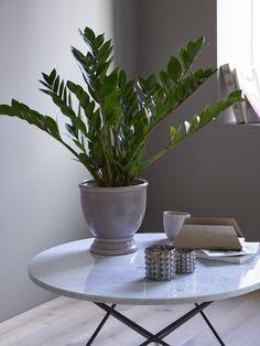 Zamioculcas er en av de enkleste grønne plantene å lykkes med. My Happy Place, Houseplants, Planters, Canning, Profile, Gardening, Posts, Website, User Profile
