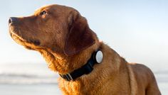 How Active Is Your Dog? The Whistle Knows! http://techmash.co.uk/2014/02/25/how-active-is-your-dog-the-whistle-knows/