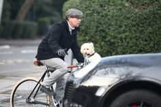 Nice 29 Incredible Celebrity Dog Fathers